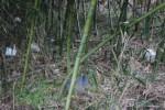 竹藪に散乱している骨壺たち