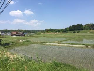 北黒田の田園風景(取材した5月8日当時