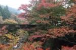 河内渓谷の紅葉(11月7日撮影)