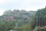 ナラ枯れが発生した森(津市白山町で撮影)