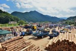 賑わう木材市場の会場(横を名松線の列車が走っている)