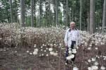山林にできたミツマタの群落と、岸野隆夫さん(今月19日撮影)見頃後半を迎え、花の色がピーク時の黄から白へと変わっていた