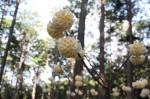 三又に分かれた枝の先に咲く黄色い花