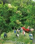 プラモサミットの展示作品「収穫-HARVEST-」