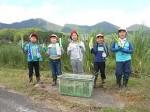 楽しみながら収穫したマコモを手にする児童達