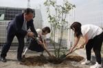 シラカシの木を植える(左から)室橋支店長、奥田さん、池田さん