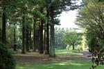 「レッドヒルヒーサーの森」