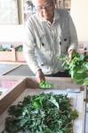 蚕に桑の葉を与える西田会長