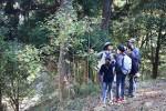 樹木を観察しながら森を巡る参加者ら