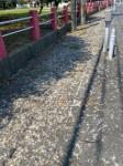 カラスの糞で汚れた道路 (津市大門で8月撮影)